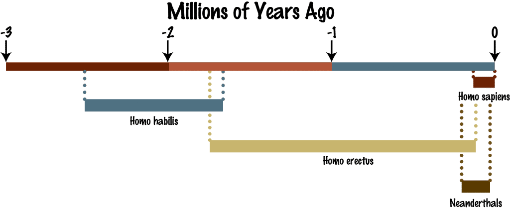 diagram showing the hominid timeline